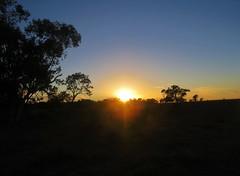 Moree Sunrise (tom_2014) Tags: tree sky sunrise dawn outback landscape view light sun grass farm travel australia australian dry moree nsw newsouthwales blue coolabah