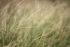 kicked into the long grass (Francis Mansell) Tags: abstract blur grass plant blade leaf kew kewgardens royalbotanicgardenskew doubleexposure nikanalogefexpro2 bokeh dof depthoffield