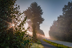 Allee im Nebelschein (FotoArt Treu) Tags: achterwehr gros nordsee felde sonnenstrahlen farbig strase fahrradweg hdr allee bäume sonne sonnenaufgang kiel