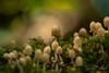 Little mushroom group (SarahW66) Tags: mushroom mushrooms bokeh bokehphotography naturalbokeh sigmamacro macrolens macrophotography canon80d natural nature naturephotography fungi