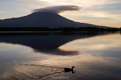 富士山 Mt.Fuji (Masayuki Nozaki) Tags: fuji fujiyama fujisan landscape mountain sky clouds lake japan sunrise canon eos 6d 35mm 富士山