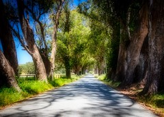 Tree Tunnel on Stage Road 5 (CDay DaytimeStudios w/1,000,000 views) Tags: bluesky california countryroad countryside pacificcoast pacificcoasthighway road sanmateocoast sanmateocounty stageroad trees