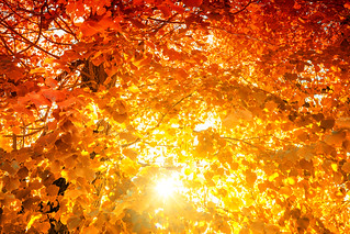 Das Leuchten des Waldes