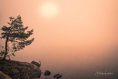 Endless Fragments of Time (Fredrik Lindedal) Tags: tree lake fog nature ilovenature ilovesweden siluette rocks silence mindfulness sunlight sunrise mist misty sweden sverige sky water serene rock landscape