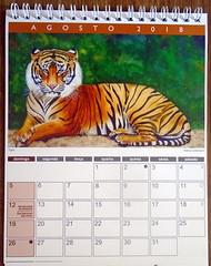 Watercolor calendar 2018-02 - DSC04002 (Dona Minúcia) Tags: art painting watercolor calendar2018 animalkingdom arte pintura aquarela reinoanimal calendário tiger tigre