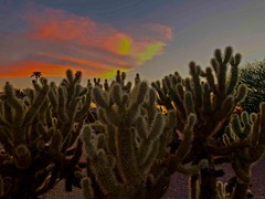 """All Hail the Sun God"" (oybay©) Tags: monsoon monsoon2018 sky clouds threatening summer color colors muppets sunset arizona mybackyard cactus chollas silhouette outdoor skyline field landscape tree plant suncitywest"