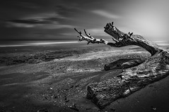 Waiting for godot .. (tchakladerphotography) Tags: sea ocean neil bay coastal beach mood atmosphere fineart treetrunk sky clouds water corals light blackwhite bw monochrome