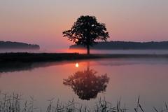 IMG_4181 (geraldtourniaire) Tags: natur nature nebel canon landschaft sonnenaufgang eos6d ef 24105l 6d baum