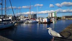A kikötő őrszeme (Plymouth, Anglia) (milankalman) Tags: bird seagull sea water sky harbour summer ship yacht