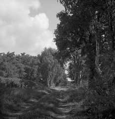 The old west-east road (Rosenthal Photography) Tags: ilfordfp4 ff120 asa125 ostepfad mittelformat 6x6 schwarzweiss 20180715 rolleiflex35f ilfordlc2912920°c12min analog nordpfade landscape forest trees shire mood july summer path pathway track trail rollei rolleiflex f35 35f sk schneiderkreuznach 75mm ilford sfx sfx200 redfilter filter lc29 129 epson v800