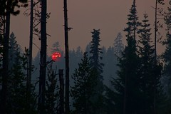 Red Sun (SkylerBrown) Tags: california climatechange evening forest globalwarming nature oregon red silhouette smoke summer sun sunset travel trees