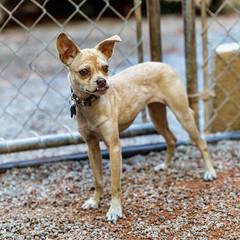 Bailey15Sep201836.jpg (fredstrobel) Tags: dogs pawsatanta atlanta usa animals ga pets places pawsdogs decatur georgia unitedstates us