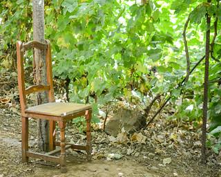 Descanso en la vendimia. Resting at the grape harvest