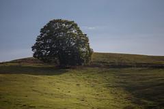 The Shire (Massimiliano Teodori) Tags: shire hobbiton hobbiville frodo bilbo baggins landscape tree hill green grass