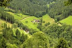 _DSC3908 (SLVA49) Tags: hierba casa granja nikon df 70200mm f4