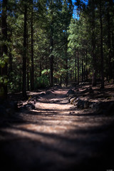Forest trail (Rico the noob) Tags: dof bokeh d850 landscape nature 58mmf14 outdoor 58mm stones trees tree forest tenerife teneriffa published 2018 sky