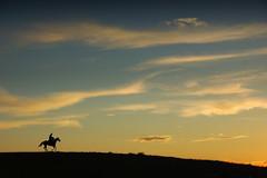 À Memória de Paixão Côrtes (Eduardo Amorim) Tags: gaúcho gaúchos gaucho gauchos cavalos caballos horses chevaux cavalli pferde caballo horse cheval cavallo pferd crioulo criollo crioulos criollos cavalocrioulo cavaloscrioulos caballocriollo caballoscriollos pampa campanha pelotas costadoce riograndedosul brésil brasil sudamérica südamerika suramérica américadosul southamerica amériquedusud americameridionale américadelsur americadelsud cavalo 馬 حصان 马 лошадь ঘোড়া 말 סוס ม้า häst hest hevonen άλογο brazil eduardoamorim
