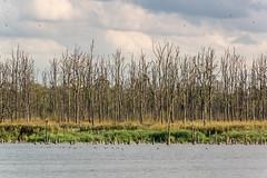 Blick auf den Moorwald (tleesch) Tags: baum drausen gewässer natur naturschutzgebietanklamerstadtbruch ort pflanze see sonstiges ungesättigt wasser grau bugewitz mecklenburgvorpommern deutschland de