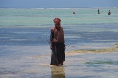 IMGP4031 Collecting clams at low tide (Claudio e Lucia Images around the world) Tags: collecting clams low tide collectingclams lowtide matemwe zanzibar pentax pentaxk5 pentax18135 pentaxart water sea tanzania