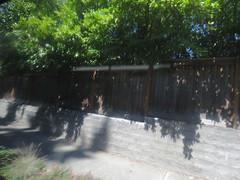IMG_8337 (Andy E. Nystrom) Tags: bellevue washington wa bellevuewashington