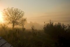 Rujan / September (Vjekoslav1) Tags: jutro morning selnik maruševec hrvatskozagorje hrvatska croatia sunce sun magla mist fog tree drvo nature priroda narava rujan september sunrise