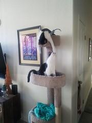20180711_074306 (sobca) Tags: cat kottur kitte eesa miu kat pussi kato chat katze popoki gatto chatool billi felis cattus gato katt meo кошка बिल्ली 猫 γάτα vighro ᏪᏌחתול