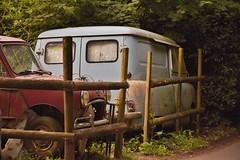 Abenhall 18 August 2018 (38) (paul_appleyard) Tags: mini bedford van old british rusty crumbling fading red blue rust austin car forest dean august 2018