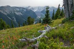 Mt. Rainier National Park (FollowingNature (Yao Liu)) Tags: followingnature sunrise wildflowers mtrainierwildflowers mtrainiernationalpark