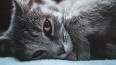 DSC09246-2 (DSB-Photorgaphy) Tags: cat katze grau augen sweet putzig süs kitten babykatze hd detail best awesome