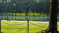 """Evening Stroll on """"The Mall"""" (PDX Bailey) Tags: fence washington dc mall chain link green grass water ducks duck reflection"""