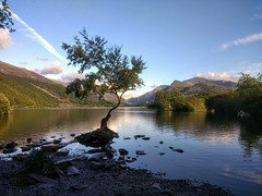 Alone by the Lakeside (wendyhayes2) Tags: llynpadarn lonetree lakeside wales scenic blueskies clouds picturesque lakes phonephotography