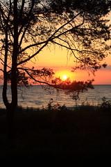 Baum am Strand (ThiOx) Tags: usedom bansin sonnenaufgang sunrise