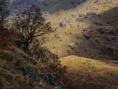 Hanging On - Ben Vane 2017 (GOR44Photographic@Gmail.com) Tags: trees benvorlich benvane arrocharalps thetrossachs rocks argyll scotland sunlight shadows munro gor44 sloy olympus omdem5 1240mmf28