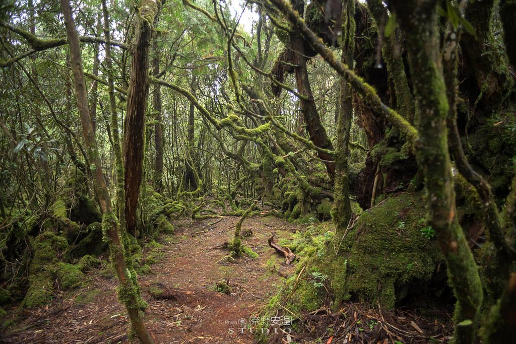 太平山翠峰湖環山步道 |走在泥濘的道路上,只為途中美景 | 宜蘭大同鄉57