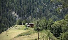 retour à Bourg-St-Pierre (bulbocode909) Tags: valais suisse valdentremont bourgstpierre chalets forêts arbres montagnes nature vert prairies