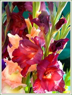 Indian Summer Flowers : Gladiolus