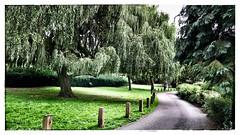 Balade dans un jardin Anglais (Jean-Louis DUMAS) Tags: landscape paysage verdure vert promenade balade angleterre tree arbre nature parc jardin