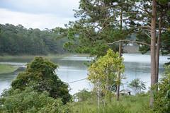 _DSC6706 (Quyr) Tags: dalat vietnam green smoke frog cloud tree forest langbiang lamdong portrait thunglungvang duonghamdatset