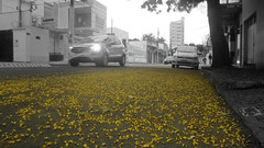 Just... (Guilherme Alex) Tags: car traffic ground yellow blackandwhite cutout nature natural lights wheels fast calm morning world wonderful composition gold colorfull angle moment tree leaves flowers petals view city cityscape citylife citycenter citymorning citystr citystreet alone outside cloudyday rainyday mycity mylife myworld buildings walking teófilootoni minasgerais brazil brasil wow