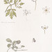 Sketches of wood anemone and sweet violet by Julie de Graag (1877-1924). Original from the Rijks Museum. Digitally enhanced by rawpixel.