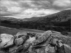 another drystone wall ... (Barbara Fallas) Tags: lakedistrict