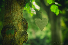 love (Monica Muzzioli) Tags: heart love tree leaves green peaceful garden blur bokeh canon coth5
