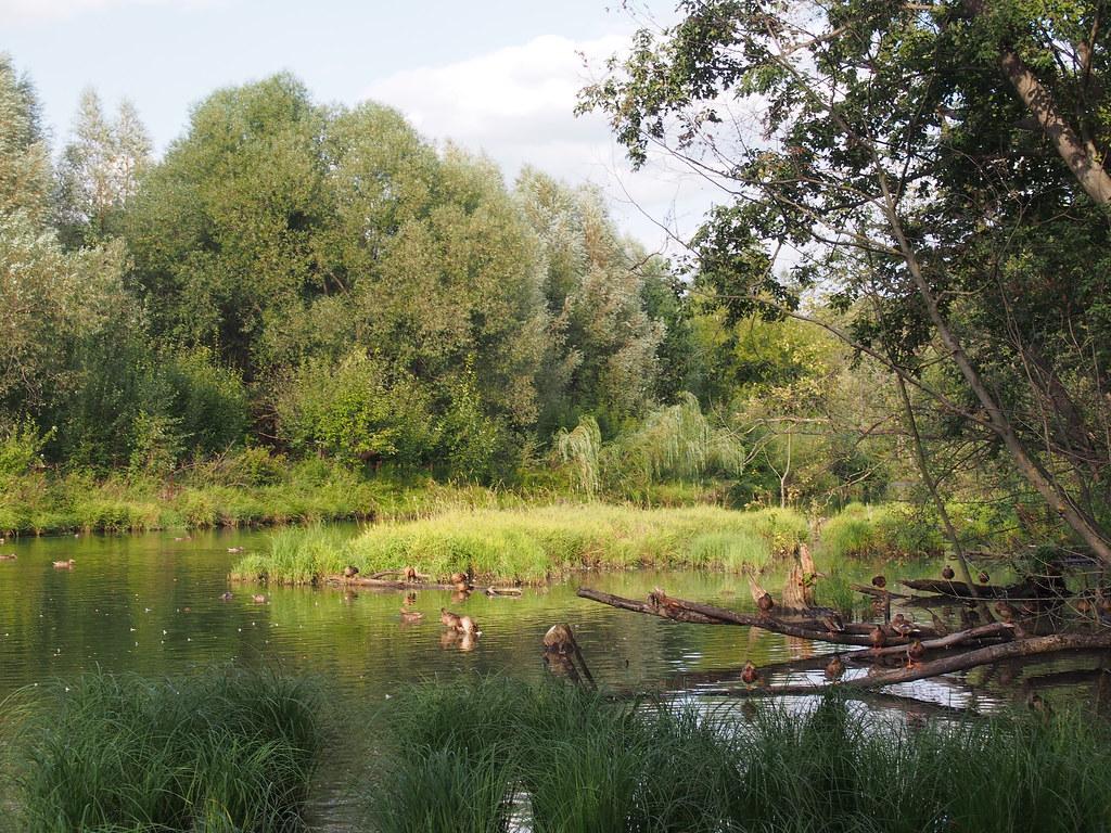 фото: Река Химка, парк Покровское-Стрешнево