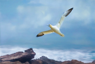 Wings are like dreams. Before each flight, a bird takes a small jump, a leap of faith, believing that its wings will work. That jump can only be made with rock solid feet ~ J.R. Rim~