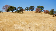 DSC_1763-a39 (stumbleon) Tags: nikondslr nikond7200 amadorcountycalifornia landscape trees california rural countryroads grassland rollinghills