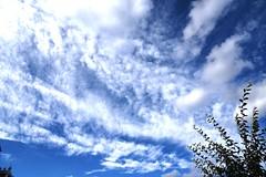 DSC_1596 (PeaTJay) Tags: nikond750 reading lowerearley berkshire gardens outdoors nature blue sky clouds