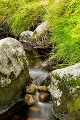 Heather in Moutain Stream_6406 (bella_blue_star) Tags: heather stream autumn wicklow ireland mountain