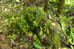 In the rainforest / В тропическом лесу (Vladimir Zhdanov) Tags: travel indonesia bali nature rainforest wood tree plant leaf stone grass tropical
