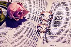 Photo 2012 (Shumilinus) Tags: 2012 50mmf18 nikond90 rose flower rings goldenrings hearts wedding book bible lyrics retouch romance