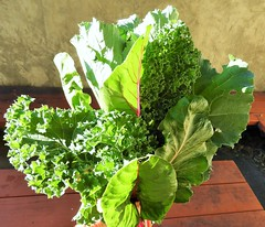 Bouquet of fresh leafy greens (Promoting Nutrition, Food Safety & Health) Tags: leafy greens vegetables healthy plantbased nutritious kale collards beets swiss chard bouquet